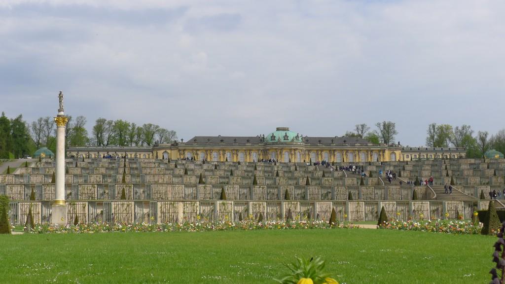 Vignes plantées devant le château