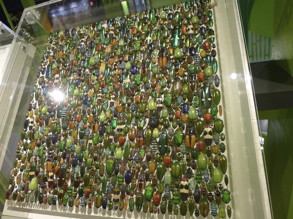 insectes jardin Botanique Montréal