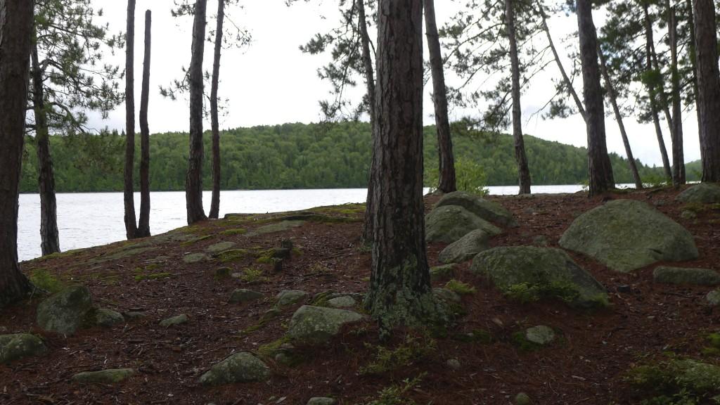 foret sur le lac de Sacacomie