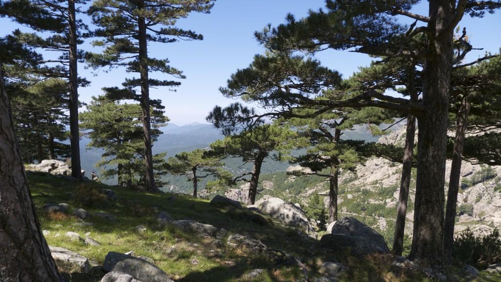 Forêt à proximité des aiguilles de Bavella