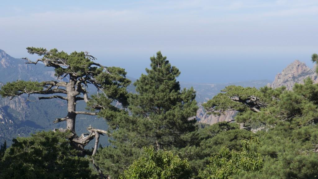 La cime des arbres vers les aiguilles de Bavella