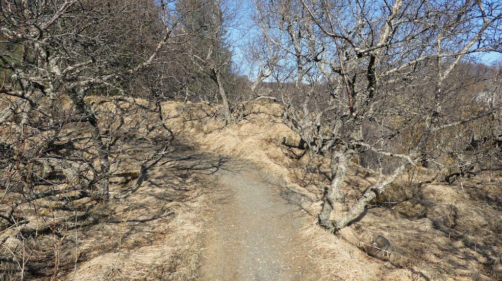 chemin pour Svartifoss