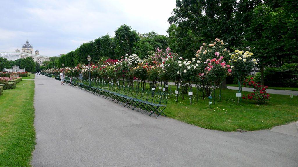 parterre de roses dans le burggarten