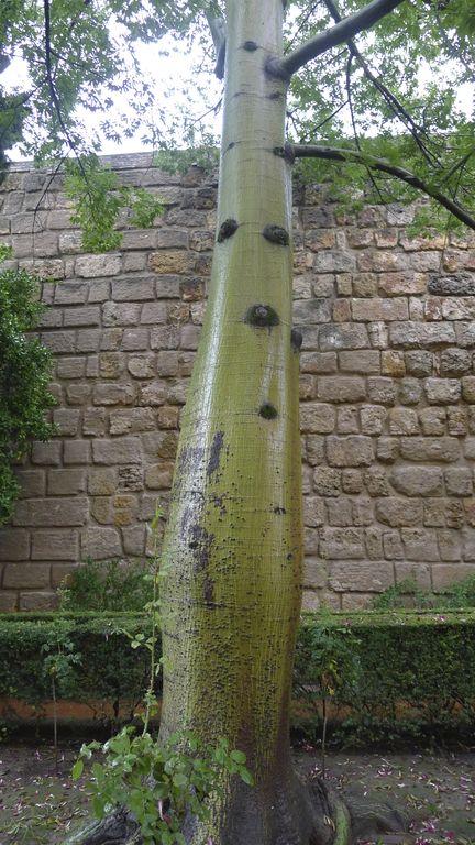 arbre à l'entrée