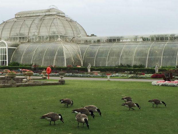 serres au Kew garden