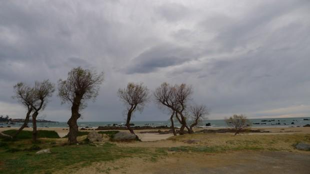 les tamaris sur la plage