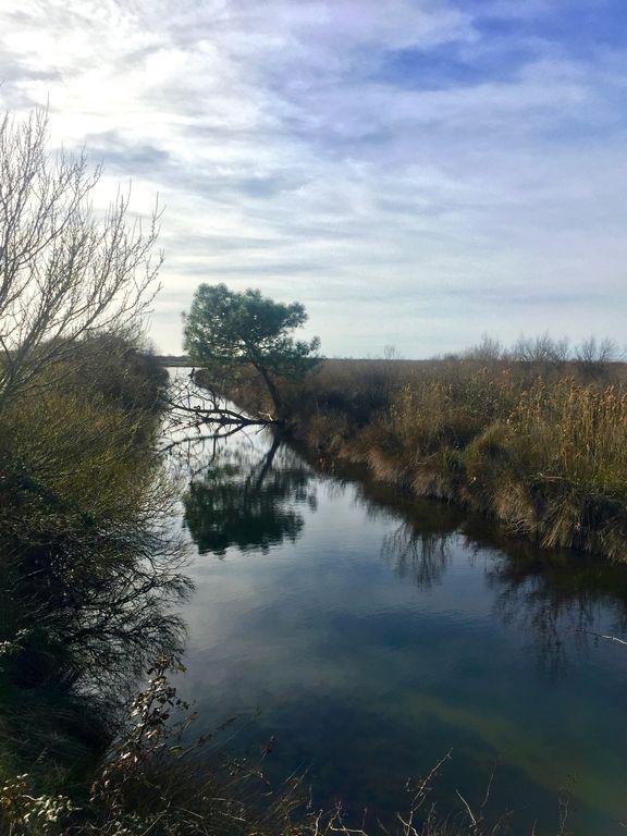 canal dans le domaine de Certes
